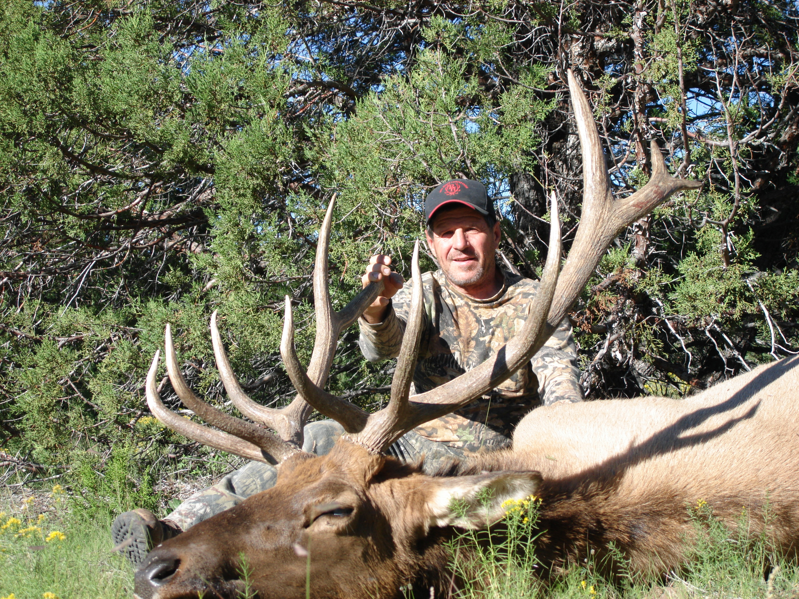 new mexico elk hunts 33