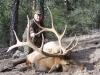 new mexico elk hunts 7