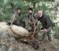 new mexico elk hunts 42