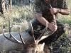 new mexico elk hunts 14