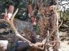 new mexico elk hunts 21