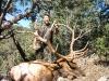 new mexico elk hunts 30