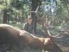 josephs-bull