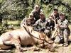new mexico elk hunts 31