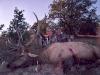 new mexico elk hunts 1