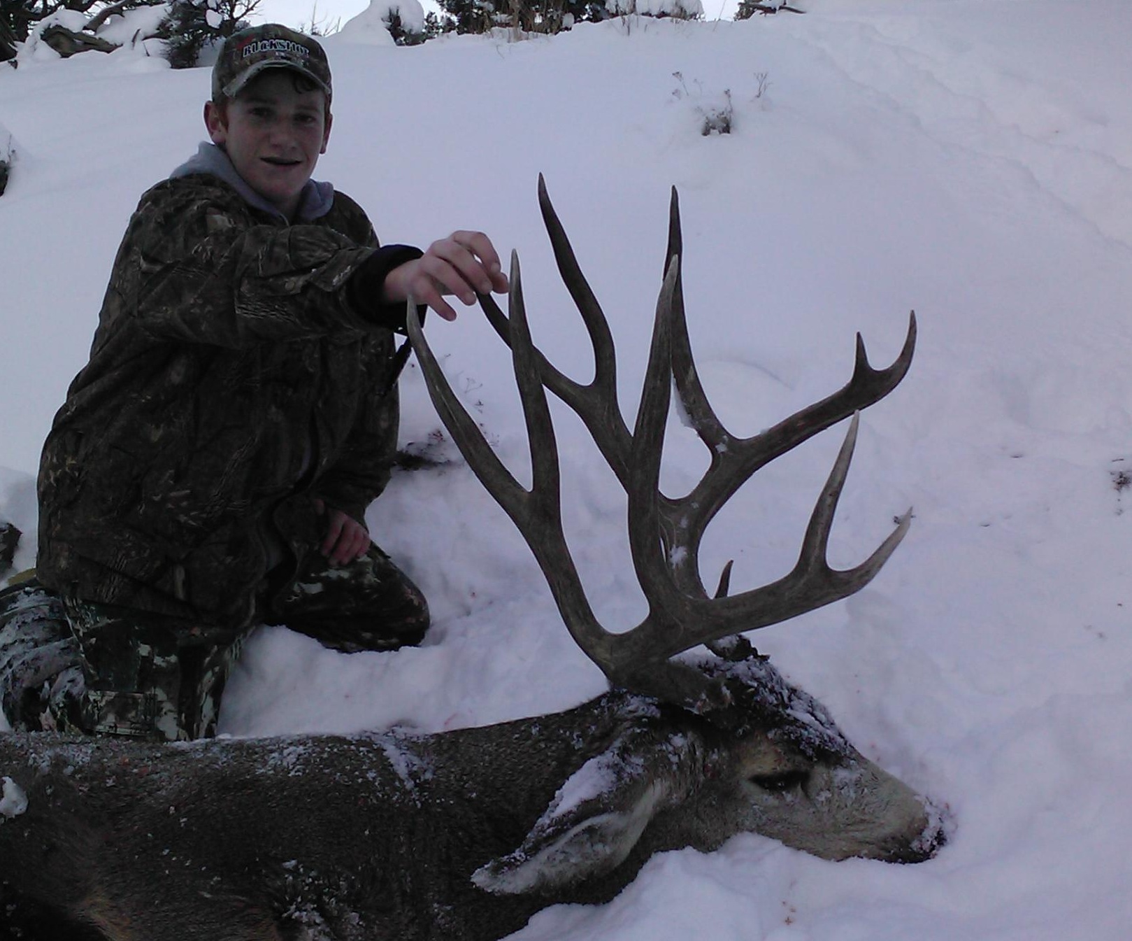 new mexico mule deer hunts 10