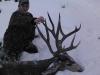 new mexico mule deer hunts 10