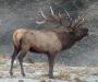 new mexico elk hunts 10