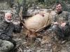 new mexico elk hunts 12