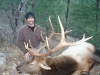 new mexico elk hunts 43