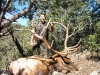 new mexico elk hunts 30