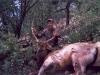 new mexico elk hunts 2