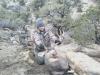 new mexico mule deer hunts 13